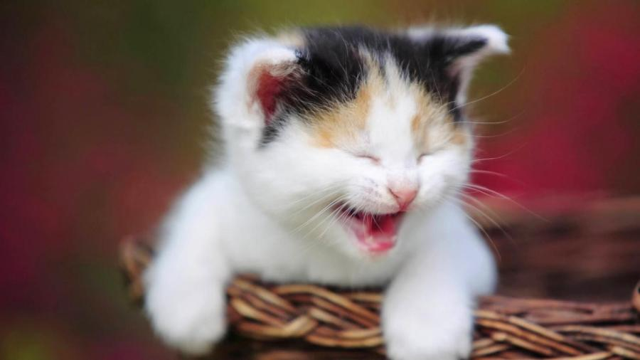 cute-cat-happy-4741